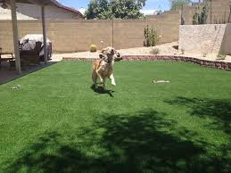 Turf For Backyard by Artificial Turf That Any Pet Especially Dog Cannot Easily Damage
