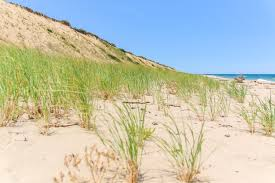 the natural beauty of the cape cod national seashore the journey