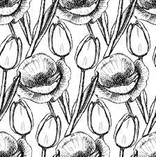 sketch tulip and poppy u2014 stock vector kali13 50144523