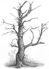 drawing a tree without foliage drawing nature joshua nava arts