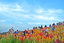 Photo Flower Garden by The All New Sirao Flower Garden In Cebu All You Need To Know