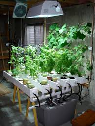 indoor hydroponic garden under hid metal halide plant grow light