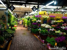 wholesale flowers near me yangjae flower market travellerelf