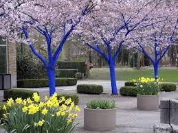 Tree Ideas For Backyard Comfortable 30 Backyard Tree Ideas On Bright Painting Ideas For