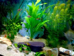 idee deco aquarium décoration d aquarium pas cher best 25 decoration pour aquarium