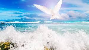 dove tag wallpapers dove nature sky jetty desktop