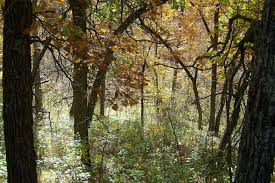 North Dakota forest images The homen state forest in north dakota is unlike anything else jpg