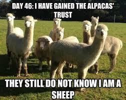 Funny Feel Good Memes - feel better animal memes image memes at relatably com