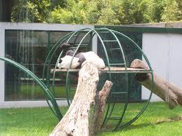 Pulte Wiki by File Chapultepec Zoo Panda Jpg Wikipedia