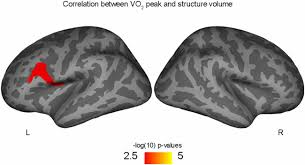 frontiers aerobic fitness linked to cortical brain development