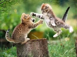 Desktop Hd Free Pictures Animals Free Animal Wallpapers