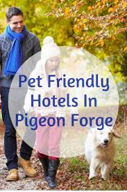 best 25 cat friendly hotels ideas on pinterest hotels for dogs