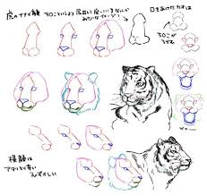 how to draw a tiger from a tigers draw and