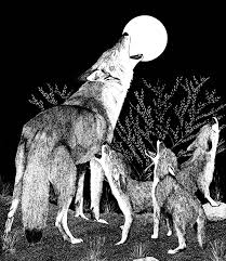 coloring pages of animals in their habitats coyotes living with wildlife washington department of fish