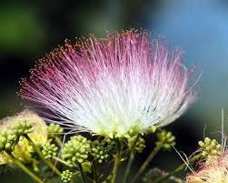flowering trees for landscaping inspiration
