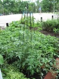 arkansas vegetable gardening how to plant a vegetable garden in