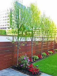 trees for narrow spaces miketechguy