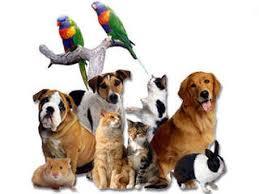Pet What Pet Am I Proprofs Quiz