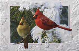pumpernickel press wildlife cards baby cardinal bird home christmas cards animals birds