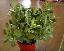 24 best house plants images on pinterest house plants inside