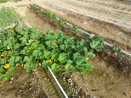 backyard vegetable gardening for beginners full size of garden