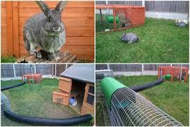 Best Rabbit Hutches Rabbit Friendly Housing Manufacturers