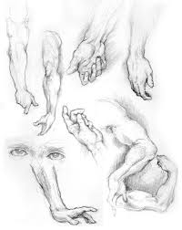 60 best human anatomy images on pinterest hand sketch human