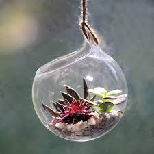 Succulent Kits by Hanging Glass Orb Succulent Terrarium Kit By Dingading Terrariums