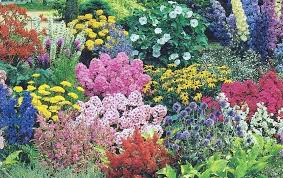 delightful perennial flower garden by pamos pixdaus