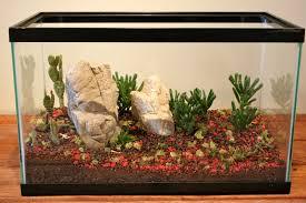 fish tank cactus terrarium fallcreekonline org