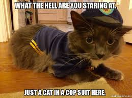 Cat In Suit Meme - what the hell are you staring at just a cat in a cop suit here