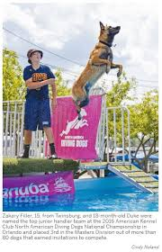 belgian shepherd ohio what u0027s dock diving twinsburg boy and his dog introduce sport to