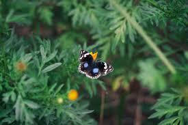 black white and blue butterfly on yellow flower free stock photo