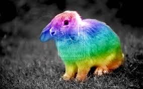 rabbit bunny bunnies united network house rabbit society of illinois