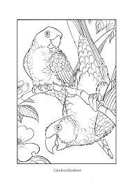 blast from the past cornell lab of ornithology birdsleuth k 12