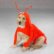 Dogs Halloween Costume Lobster Dog Halloween Costume Casual Canine