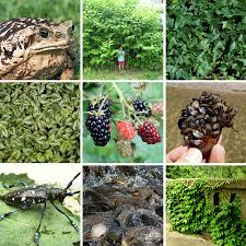 pacific northwest native plants invasive weeds primer forterra