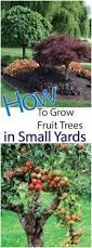 backyards splendid 97 best fruit trees to grow in backyard cool