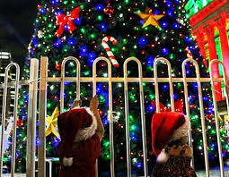 Phoenix Zoo Christmas Lights by Christmas In The City Brisbane Cbd Brisbane Family Explorers