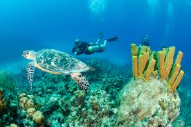 learn to scuba dive scuba diving certifications