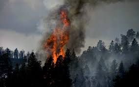 Wildfire Castlegar by Home Cabin Forestry Services