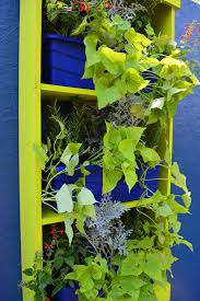 how to plant a drought tolerant living wall garden shawna coronado