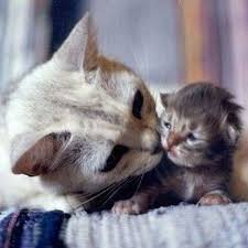 beautiful kittens beautiful kitten 2nd november 2012