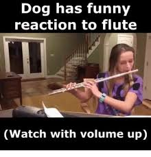 Flute Player Meme - dog has funny reaction to flute watch with volume up meme on me me