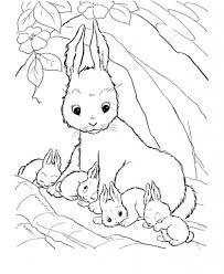 bunny coloring page eliolera com