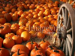 free thanksgiving wallpaper backgrounds shared by emily 50337