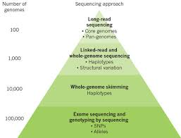 genomic innovation for crop improvement nature