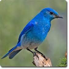 Backyard Wild Birds by Blue Grosbeak Wild Birds Backyards And Blue