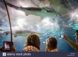haie unterwasser tunnel im aquarium l u0027aquarium moll d u0027espana