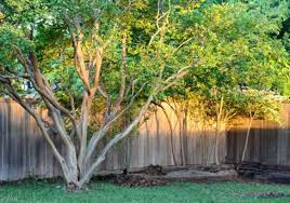 trees for backyards outdoor goods